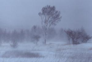 Dezső Anna Zanami próza novella tél szél őz képforrás: https://rewalls.com/natural/21179-derevya-veter-sneg.html
