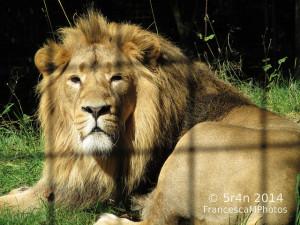 Dezső Anna Zanami próza novella oroszlánketrec embertelenség